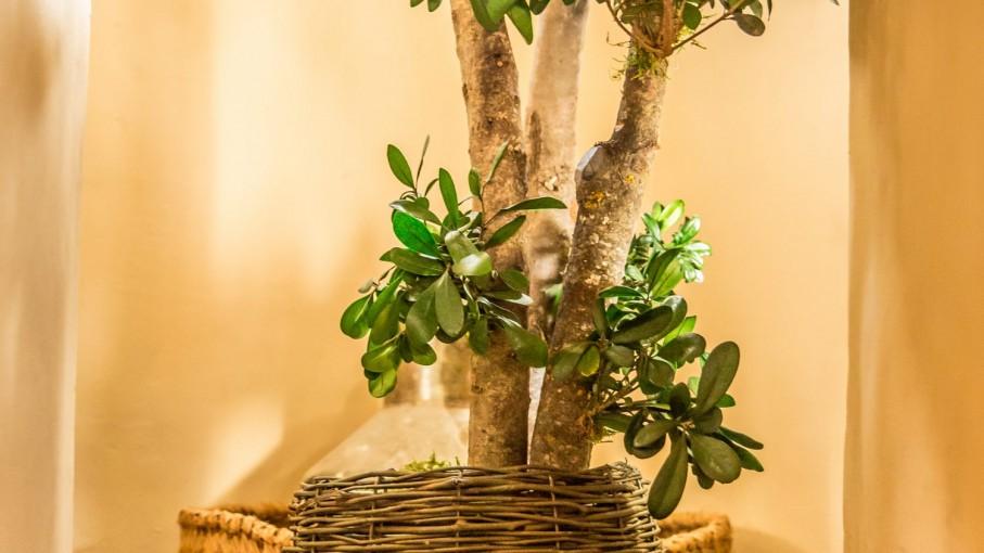 Plante stabilizate de interior.
